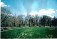 Woods.JPG.5eab09b29d9511996c18f70f1607f4a3.JPG