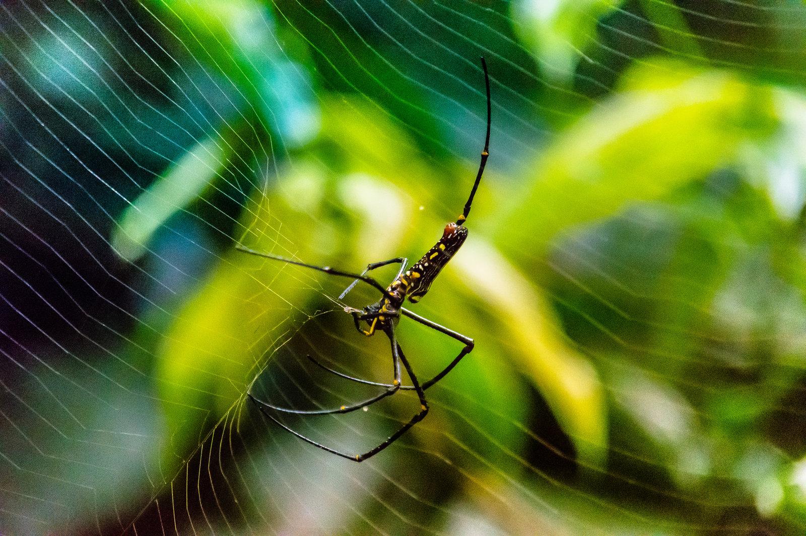 Spider in Kao Yai November 2016