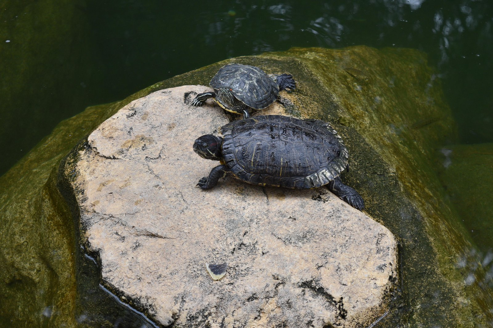 Turtles in Hong Kong Park