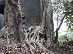 Roots of a tree at an old temple in Sangklaburi