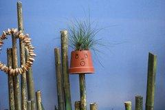 Shocked Flower Pot