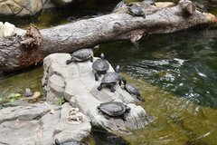 Turtles in Hong Kong Park